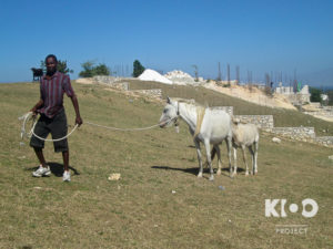 VFW_Haiti2013_Fenickson_Herder-0105